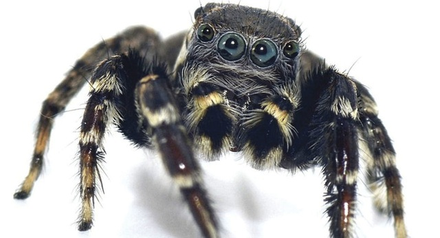Mơ thấy nhện