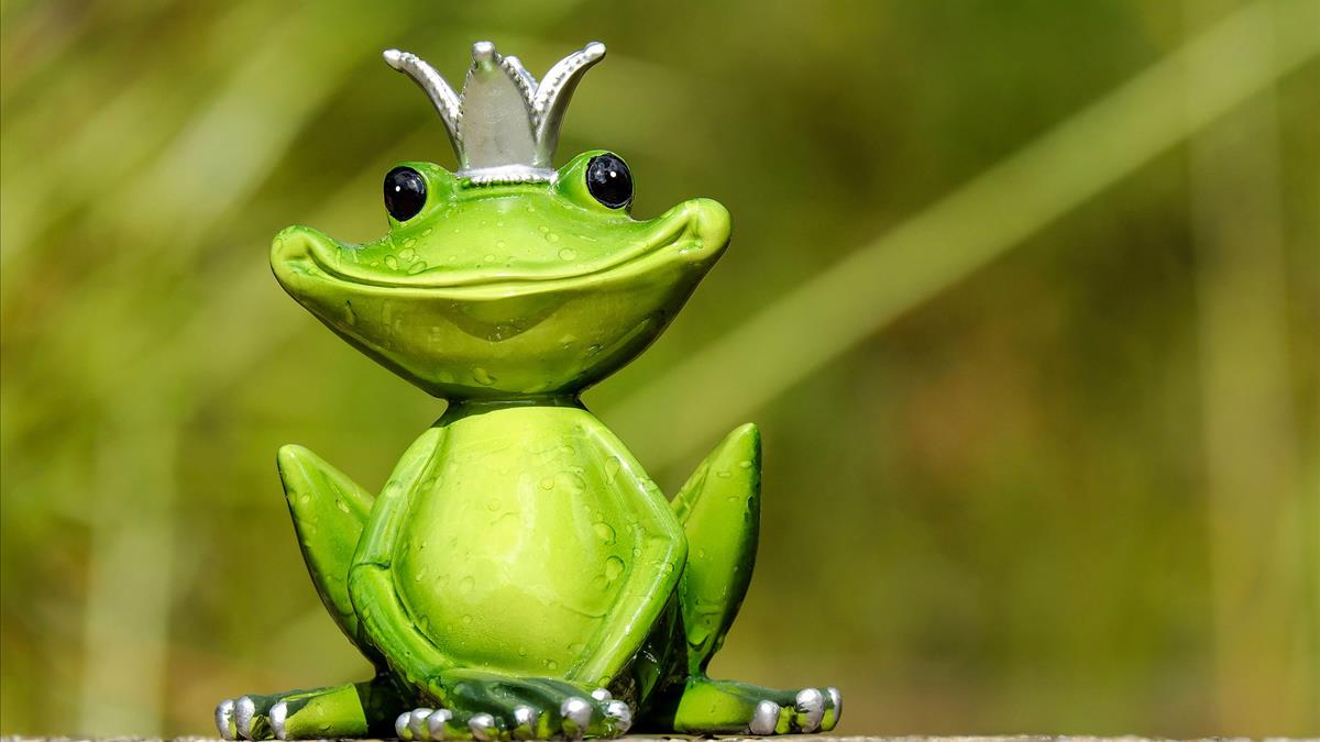 mơ thấy con ếch